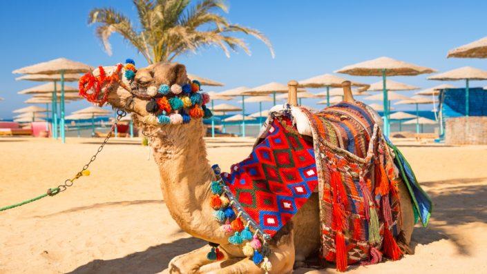 Egipt 4