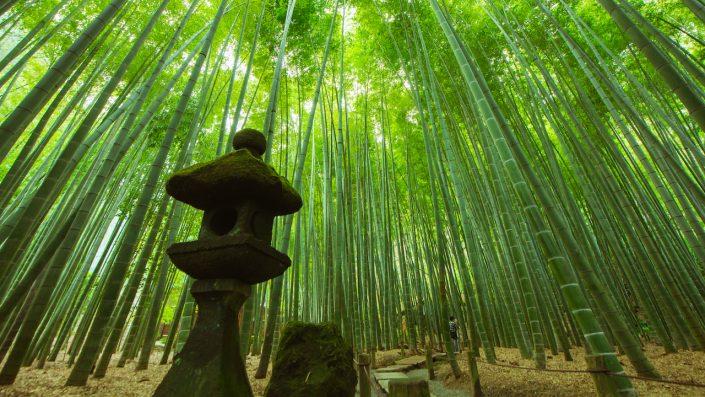 Bamboo Garden, Kamakura, Japonia, Asia