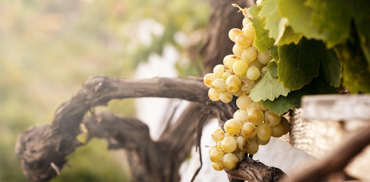Muzeul Vinului Santorini