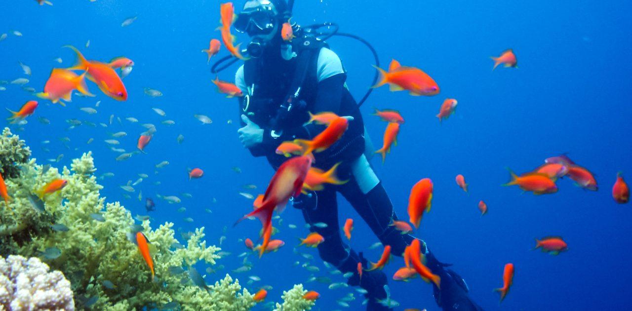 dreamstime xxl 135541463 Sharm el Sheikh diving
