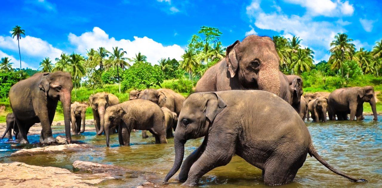 elefanti, Thailanda